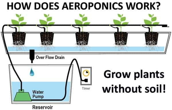 an analysis of hydroponics growing plants without soil Diy hydroponics 101: all you need to know about growing plants without any soil grow more plants in a smaller space without soil while it sounds too good to be true.