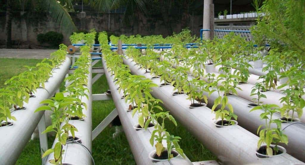 a description of the advantages of producing crops through use of hydroponics Commercial scale hydroponic vegetable production high quality sorrel hydroponics is becoming a very important way to produce vegetables in south africa because of the production potential,the high quality of the produce and the efficient water usage.