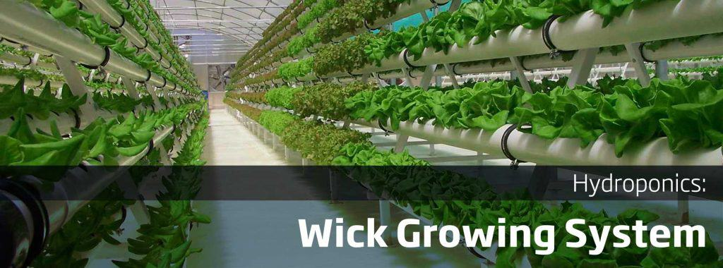 Ultimate Guide To Setting Up Wick Hydroponic Growing