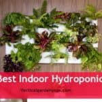 Best Indoor Hydroponic Garden