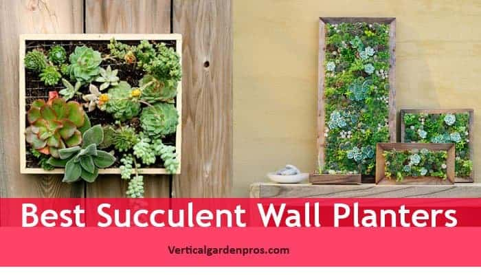 Succulents Can Be The Right Choice To Fill Your Indoor, Outdoor Or Garden  Wall With Their Colorful And Living Art Presence.