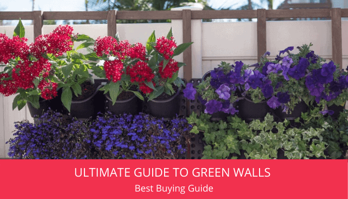 Ultimate Guide to Green Walls