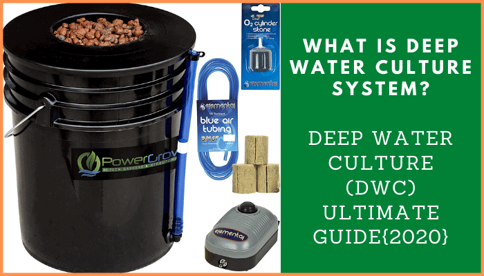 What is Deep Water Culture System