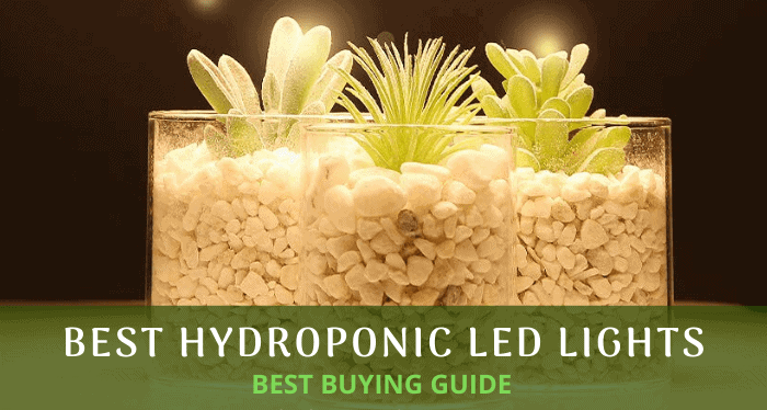 Hydroponic LED Lights for Rapid Growth