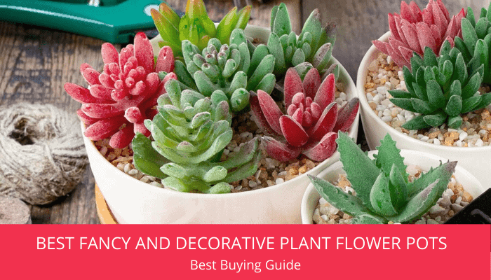 Best Fancy And Decorative Plant Flower Pots