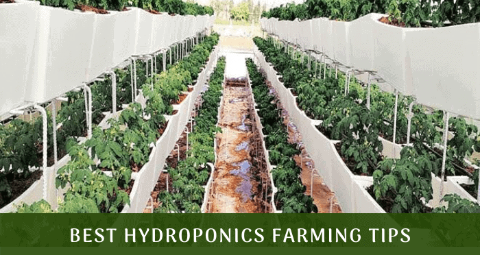 Best Hydroponics Farming tips